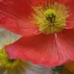 Como escolher flores sazonais?