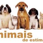 Como tratar de um animal de estimação?