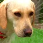 Como dar banho ao cão em 1 minuto