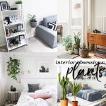 Plantas de Interior: Principais Cuidados a Ter
